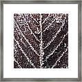 Frozen Leaf Framed Print