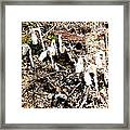 Fungi Fronds Framed Print