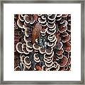 Fungi On Log Framed Print