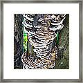 Fungus Invasion Framed Print
