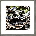 Fungus_1 Framed Print