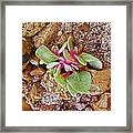 Fuzzy Plant On Blue Mesa Trail In Petrified Forest National Park-arizona  Framed Print
