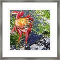 Galapagos Sally Lightfoot Crab Framed Print