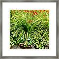 Games Frogs Play Framed Print