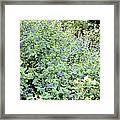 Garden Blues Framed Print