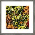 Garden Colors Framed Print