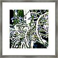 Garden Orbs Framed Print