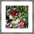 Garden Variety Framed Print