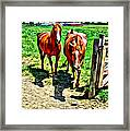 Gate Horse Framed Print