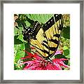 Gathering Nectar Framed Print by Kim Galluzzo Wozniak