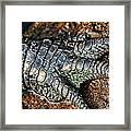 Gator Manicure Framed Print