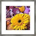 Gerbera With Seashells Framed Print