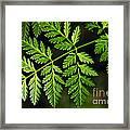Gereric Vegetation Framed Print