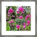German Catchfly Pink Framed Print