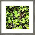 Get Lucky Framed Print by Robert J Andler