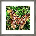 Giant Moth Framed Print