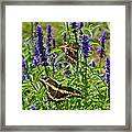Giant Swallowtail Butterfly Couple Framed Print