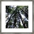 Giants Of The Forest Framed Print