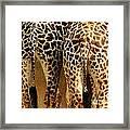Giraffe Butts 1 Framed Print