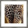 Giraffe Butts 2 Framed Print