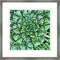 Glabrous Leaves Framed Print