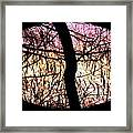 Glorious Silhouettes 3 Framed Print