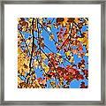 Glowing Autumn Framed Print