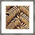 Gold Leaf Fern Framed Print