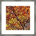 Gold Leaves Of Autumn Framed Print
