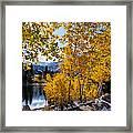Golden Aspen On The Lake Framed Print