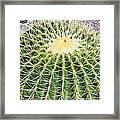 Golden Ball Cactus Framed Print