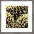 golden barrel cactus Mexico Framed Print
