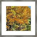 Golden Fenceline Framed Print