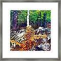 Golden Ferns Framed Print
