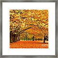 Golden Forest Framed Print by Boon Mee