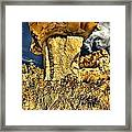 Golden Hoodoo Framed Print