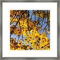 Golden Leaf Cascade Framed Print