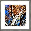Golden Leaves II Framed Print