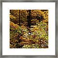 Golden Leaves In Autumn Framed Print