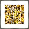 Golden Leaves In Autumn Abstract Framed Print