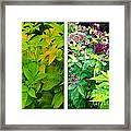 Golden Leaves To Purple Seeds Framed Print