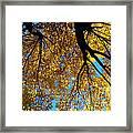 Golden Maple 9 Framed Print