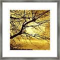 Golden Pond Framed Print by Ann Powell