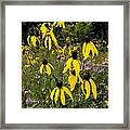 Golden Prairie Coneflower Watercolor Effect Framed Print