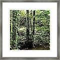 Golden Silence In The Forest Framed Print