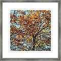 Golden Tree Lined Sky Framed Print