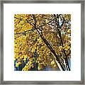 Golden Zen Framed Print