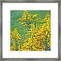 Goldenrod Flowers Framed Print
