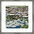 Gorgeous Water Lilies Framed Print