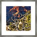 Grand Canyon Branches Framed Print